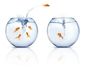 Jumping Goldfishes